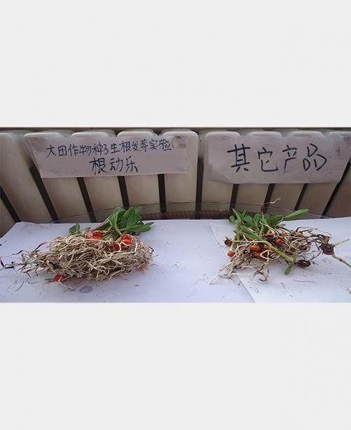大田作物种子根动乐