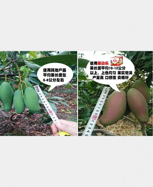 芒果果动乐