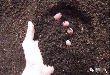 微生物菌肥助力绿色农业发展!