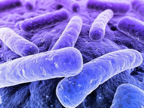 使用微生物菌肥应注意的一些问题