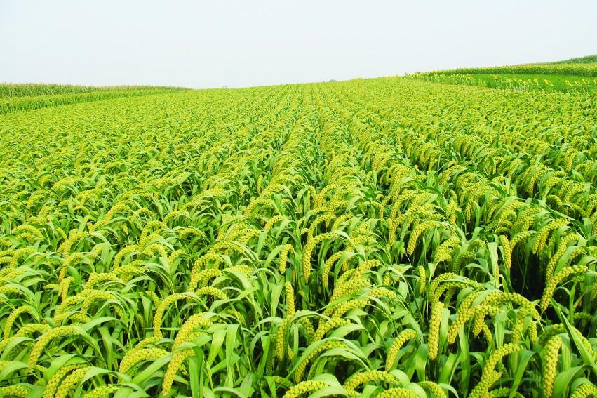 菌肥 生物菌肥 微生物菌剂 土壤改良调理剂