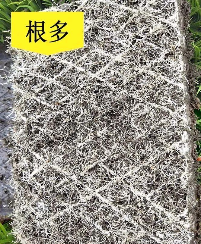 菌肥 生物菌肥 微生物菌剂