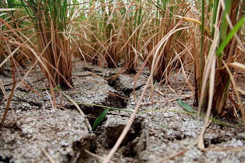 菌肥 生物菌肥 微生物菌肥