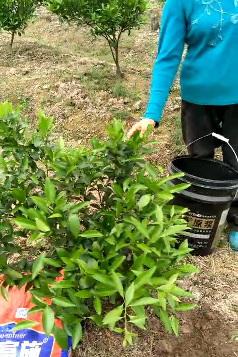 菌肥 微生物菌肥 微生物菌剂 土壤改良调理剂 生物有机肥